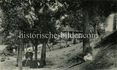 Altes Motiv vom Westerdeich in Hamburg Finkenwerder. Ein Junge hütet ein kleine Herde Kühe, im Hintergrund eine Bauernkate am Deich.