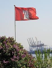 In den Vorgarten der Lotsenhäuser in Hamburg Oevelgönne blüht der Flieder - eine Hamburg Fahne weht im Wind. Am gegenüberliegenden Elbufer die Containerkräne des Terminals Burchardkai.