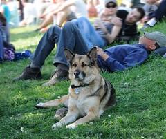 ruhe-abseits-hafengeburtstag-schaeferhund