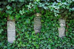 Rosengarten Gedenkstätte Bullenhuser Damm in Hamburg Rothenburgsort