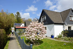 Fotos aus dem Hamburger Stadtteil Groß Borstel, Bezirk Hamburg Nord. Einzelhäuser und blühende Magnolie am Strüverweg.