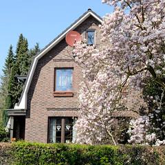 Fotos aus dem Hamburger Stadtteil Niendorf, Bezirk Eimsbüttel; Wohnhaus mit Walmdach und blühender Magnolie im Bindfeldweg.
