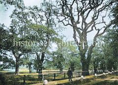 Historische Ansicht vom Eichenpark in Hamburg Harvestehude, ca. 1890; die Parkanlage ist ein Rest der ehem. Klosterwaldungen des Klosters Herwardeshude.