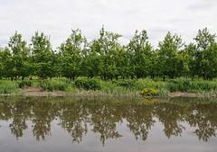 Obstbäume am Ufer der Este spiegeln sich im Wasser des einst für den Güterverkehr wichtigen Altländer Flusses. Auf der Este herrschte früher reger Gütertransport; in Buxtehude waren zahlreiche Industriebetriebe ansässig, die von dort aus ihre Waren v