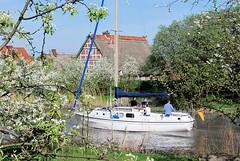 Segelboot auf der Este - blühende Obstbäume am Ufer des Flusses. Zwischen den Bäumen ein Fachwerkhaus mit Reetdach.