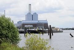 Am Ufer der Billwerder Bucht wachsen am Ausschläger Elbdeich Weiden. Am Liegeplatz haben die Binnenschiffe Mo-Bay und Michael B. fest gemacht. Die Mo-Bay ist ein Stück- und Schüttgutschiff und 1953 erbaut.