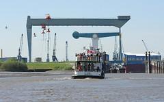 Die dicht besetzte Elbfähre ALTONA kommt von Hamburg Blankenese. Bei Niedrigwasser ist die Fahrrinne zur Este recht schmal - links ist schon der Schlick des Mühlenberger Lochs zu erkennen. Im Hintergrund der Werftkran der an der Estemündung gelegenen