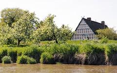 Fotos aus dem Alten Land - Wiese mit blühenden Obstbäumen am Ufer der Este.