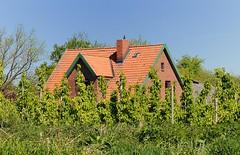Wohnhaus zwischen Obstbäumen am Esteufer.