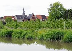 Obstanbaugebiet bei Estebrügge - Wohnhäuser und Kirchturm. Mit Gras bewachsenes Ufer der Este - Kirschbäume. Bis an die Wohnhäuser Estebrügges erstreckt sich die Kirschplantage - der Ortsteil gehört zur Gemeinde Jork. Über die Dächer der Ortschaft ra