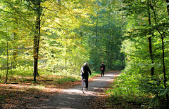 Fotos aus dem Niendorfer Gehege - Naherholungsgebiet im Hamburger Stadtteil Niendort, Bezirk Eimsbüttel; Waldweg mit Fahrradfahrerin und Spaziergängerin.
