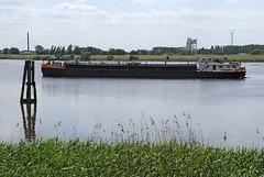 Das Binnenschiff ALBATROS fährt in der Billwerder Bucht in Höhe vom  Moorfleeter Deich; eine Duckdalbe aus Holz spiegelt sich im Wasser, im Vordergrund Schilf am Ufer. Das Binnenschiff ALBATROS hat eine Länge von 80,00m und eine Breite von 9,50m.