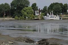 Blick auf den Holzhafen bei Hamburg Moorfleet; der Lauf der Elbe wurde um 1880 verändert, so dass dieser Teil des Holzhafens immer mehr verschlickt.