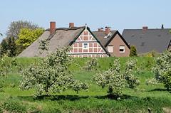 Wohnhäuser hinter dem Estedeich - Obstbäume auf der Wiese.