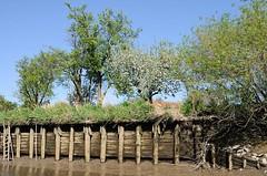 Ebbe auf der Este - die alte Uferbefestigung ist trocken gelegt. Mit Holzstämmen und zwischengelegten Bohlen wird das Ufer der Este befestigt.
