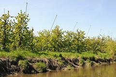 Ufer der Este - Obstanbau im Alten Land. Die Obstbäume der Plantagen stehen bis an das Wasser des Flusses, das auch zur Bewässerung genutzt wird.
